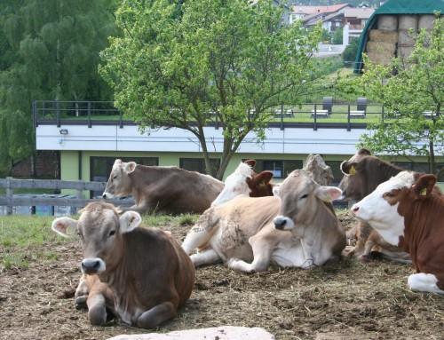 Passeggiata a vedere gli animali della fattoria